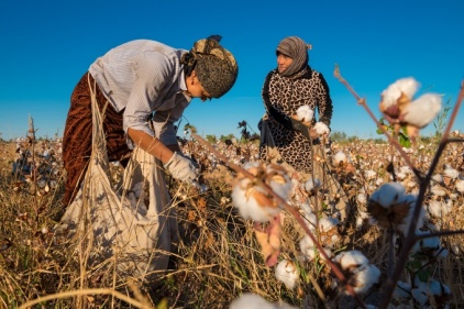 20141017-corbis-uzbekistan-cotton-1350
