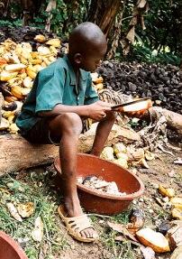 nino-cacao